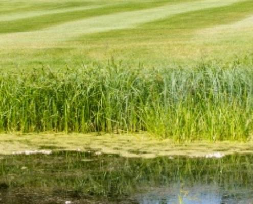 breyton-golf-course